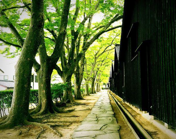 YAMAGATA SAKATA Japan Aisle Road Trip