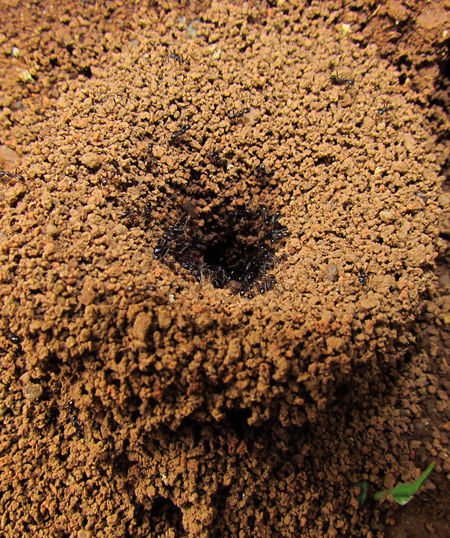 Animal Themes Animals In The Wild Ant Anthill Ants Close-up Detail EyeEm Nature Lover Floor Ground Grounds Insect Insect Paparazzi Insect Photography Insects  Macro Macro Insects Macro Nature Macro Photography Macro_collection Macroclique Sand Selective Focus Textured  Wildlife