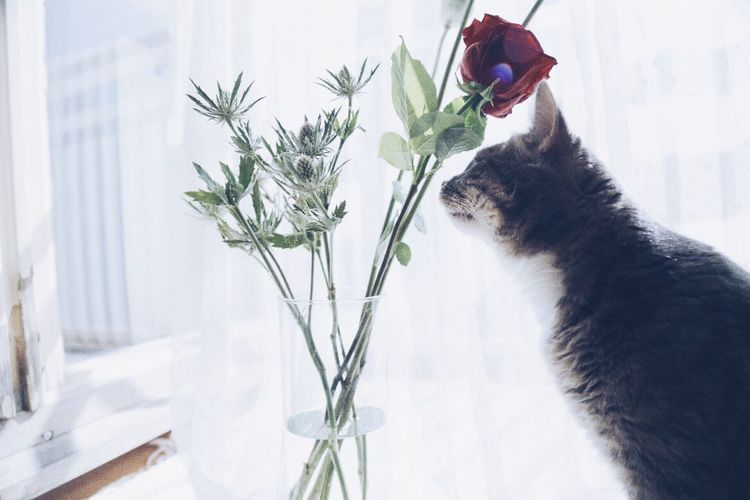Side view of cat smelling rose