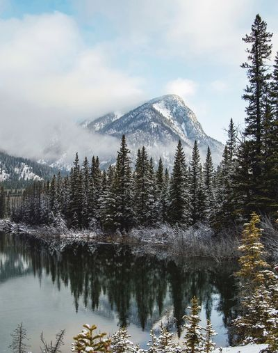 Reflection of snowcapped mountains and trees in lake