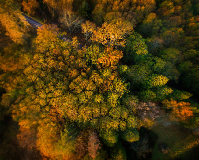 Tuttle Lane, Lummi island, Washington. Fall color still lines this rural country road. Autumn Drone  Green Color Lummi Island Nature Pacific Northwest  Puget Sound Scenic Autumn Beauty In Nature Colorful Day Dronephotography Fall Forest Maple Nature No People Outdoors San Juan Islands Scenics Seasonal Sunrise Tree Yellow