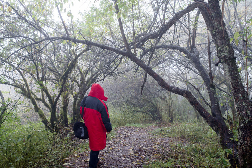 Man in red winter coat walking in muddy trail in foggy jungle, carrying a black shoulder bag. Freshness Hiking Nature Red Tranquility Travel Tree Trunks Trees Winter Coat Adventure Clothes Coat Foggy Forest Jungle Mist Outdoor People Portrait Rain Coat Selfie
