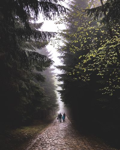 People walking on footpath amidst trees in forest