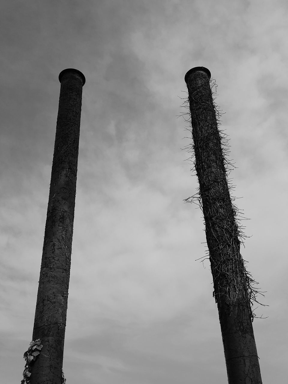 sky, low angle view, no people, nature, plant, day, tree trunk, trunk, tree, outdoors, focus on foreground, cloud - sky, pole, tall - high, tranquility, smoke stack, metal, growth, post, bare tree, wooden post
