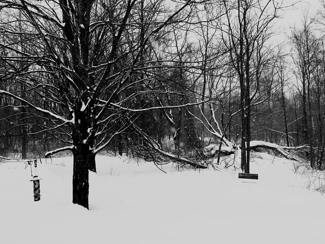 Taking Photos Monochrome IPhoneography IPhone Snow ❄ Blackandwhite Photography Black&white Black And White My Back Yard