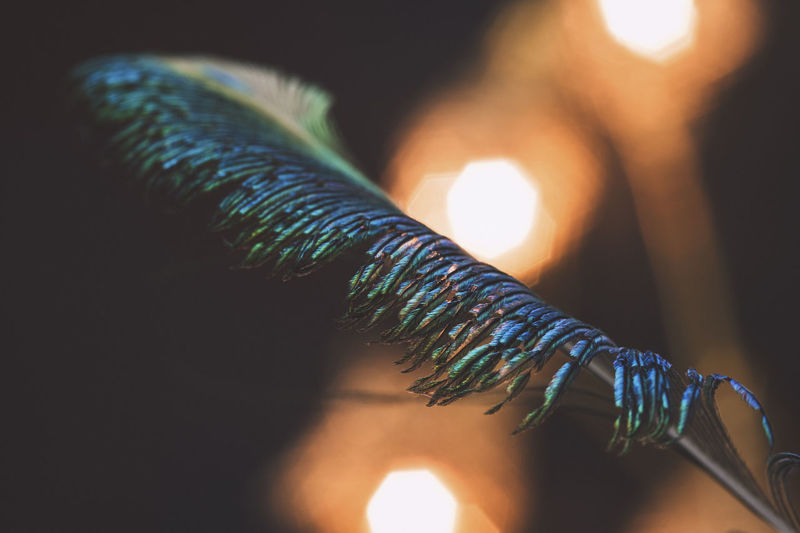 Close-up of peacock feather against illuminated lights