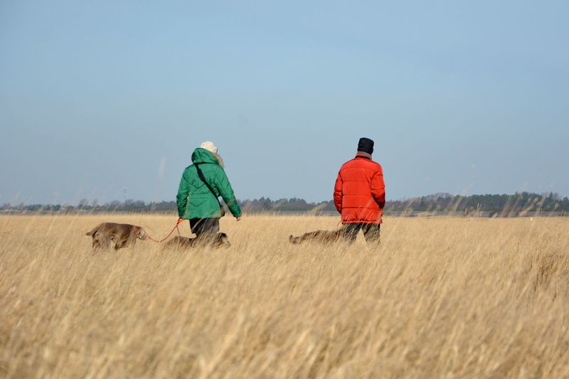 People with dogs walking on agricultural field