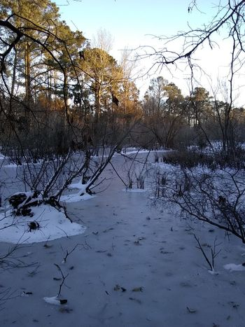 Tree Nature No People Sky Day Winter Cold Temperature Growth Outdoors Beauty In Nature Water