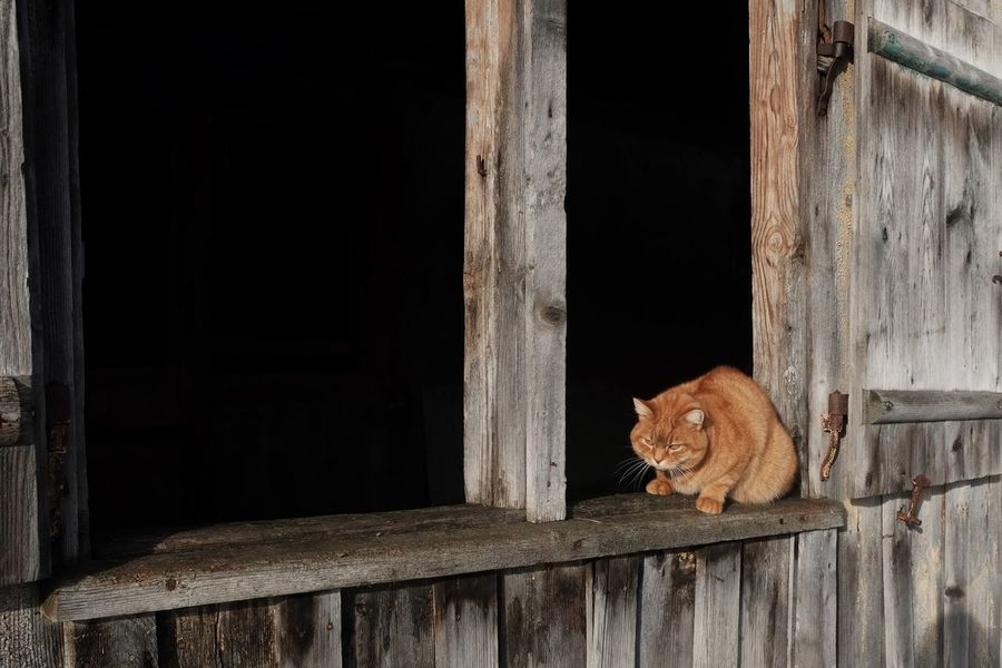 """That's not """"Garfield"""" that's """"Pascha"""" :-)) Garfield Thank You My Friends 😊 Jacklycat©2018 Cat♡ Not Garfield One Animal Mammal Domestic Cat Animal Themes Window No People"""