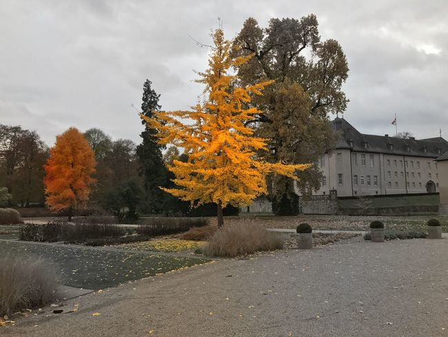 Autumn Nature Clourful Autumn Colors Castle Schloss Dyck Tree Beauty In Nature Mobilephotography IPhoneography Taking Pictures Herbstfarben Autumn Leaves