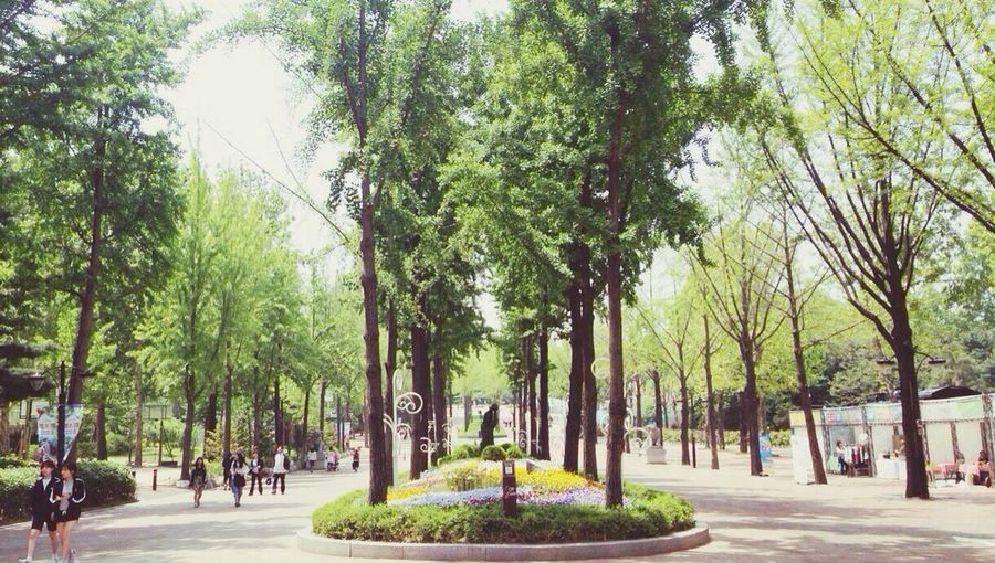Seoul Park Tree Sunset