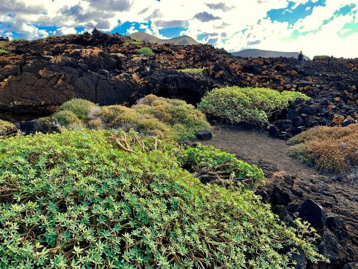 El Golfo Lanzarote Lanzarote Island Lanzarote Plant Nature Beauty In Nature Day Tranquility Green Color Sky No People Cloud - Sky Land Scenics - Nature Outdoors Landscape Non-urban Scene
