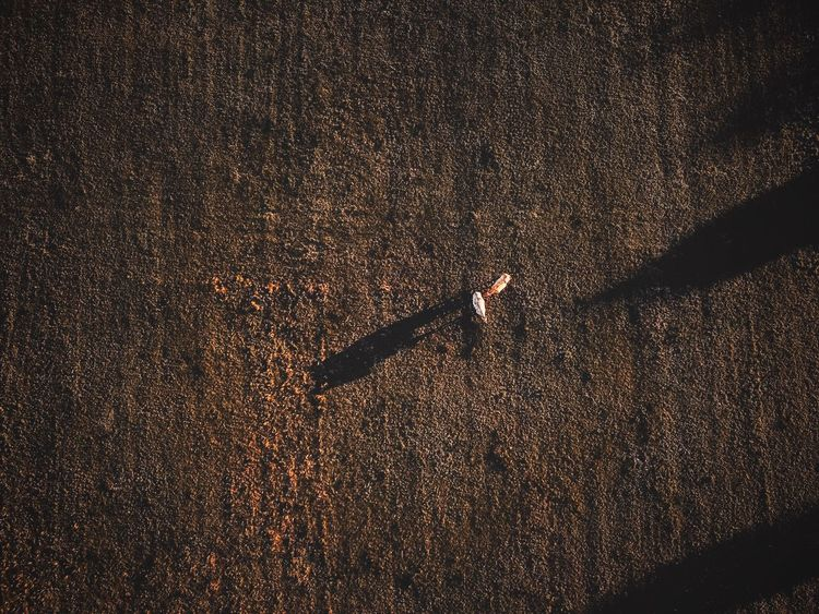 - THE FIELD - Cow Agriculture Drone  DJIxEyeEm Drone Photography Check This Out Dronephotography Field Full Frame Backgrounds No People Pattern Nature Night Illuminated Outdoors Gold Colored Close-up Textured  Beauty In Nature Shadow