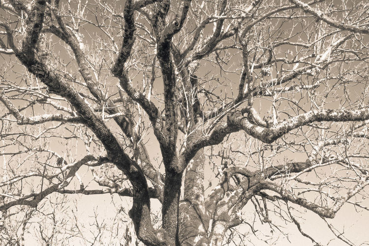 Low angle view of bare tree against sky during winter