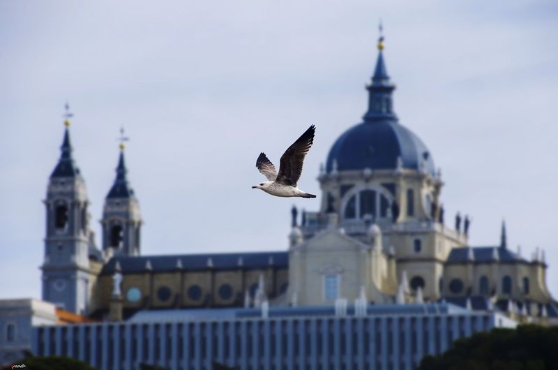 Palacio Real #madrid #madrid #callejeando #madrid #callejeando #madrid Bird Flying Building Exterior Government Animal Wildlife Day Built Structure