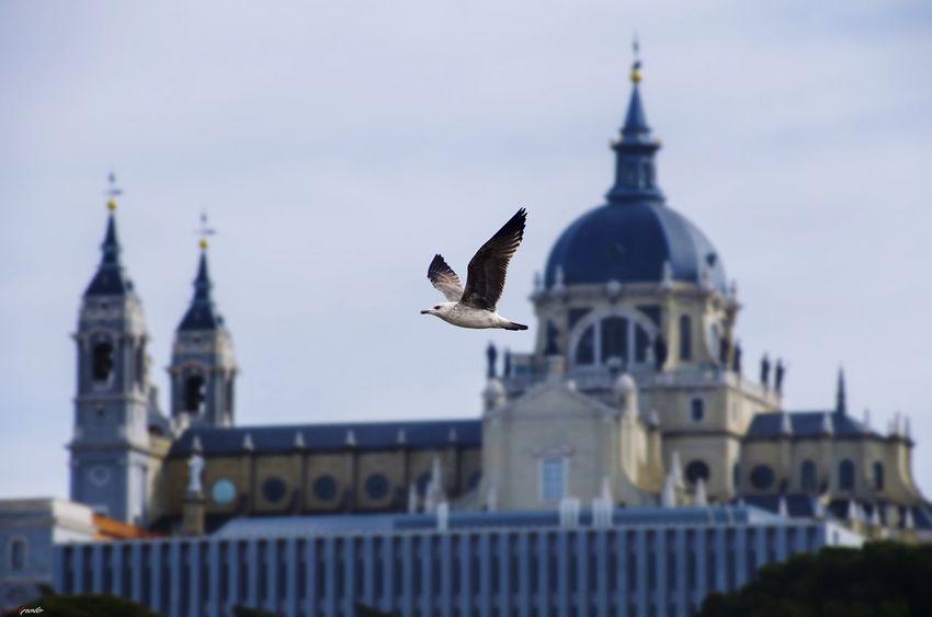 Palacio Real #madrid #madrid #callejeando #madrid #callejeando #madrid Bird Flying Building Exterior Government Animal Wildlife Day Built Structure