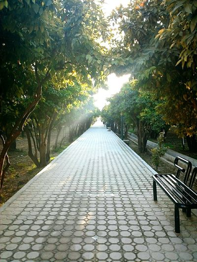 walking in one of the gardens of the city i found a green,peacful pavement! *shiraz and its oranges (Naaranj)😋* Showcase March Long Roads Green Leaves Orange Trees Pavements Long Way To Go... Walking Alone... My Lord And Savior  Power Of God Beauty Of Iran Eyeemphoto