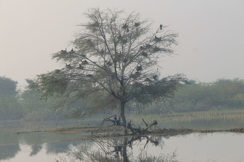 Tree Birds Bird Watching Beautiful Nature Beauty In Nature Lake Birdnest Growth Natural Phenomenon Portraiturephotography Waterfront Landscape Rural Scene Nature