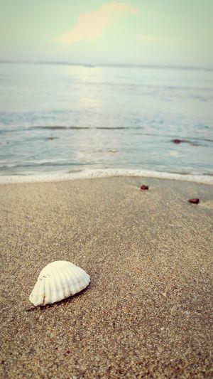 Shell on the beach Shell Beach Sea First Eyeem Photo