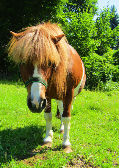 Pony Animal Animal Themes Animal Wildlife Day Domestic Domestic Animals Field Grass Green Color Herbivorous Horse Land Livestock Mammal Nature No People One Animal Outdoors Pets Plant Standing Tree Vertebrate
