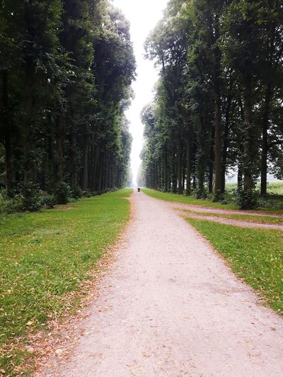 Lane trees at soestdijk holland tree stones earth Taking Photos lives death people and places
