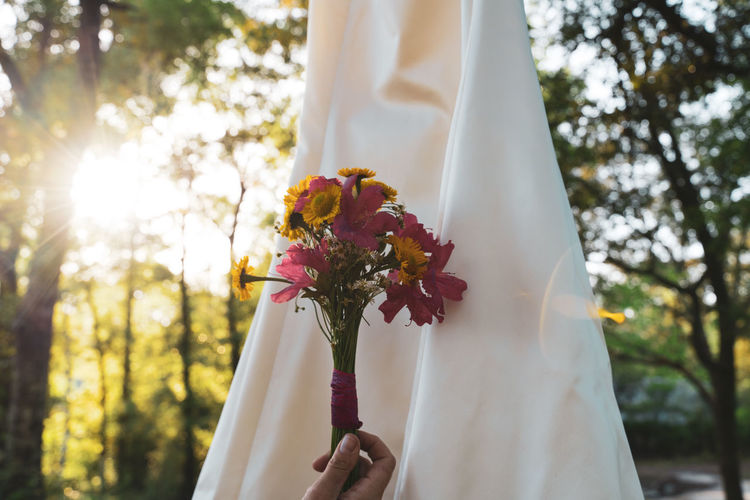 Close-up of hand holding white flower against trees