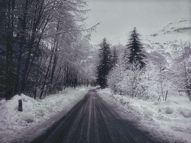 The Way Forward Cold Temperature Tree Transportation Snowing Road Weather