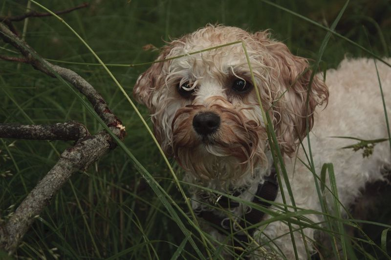 View Of Young Dog Amidst Grass