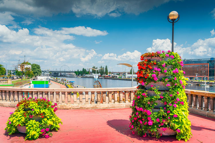 Potted plants by river in city against sky