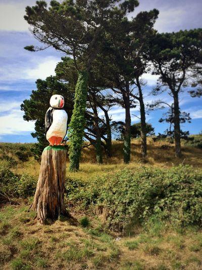 Puffin WoodLand Tree