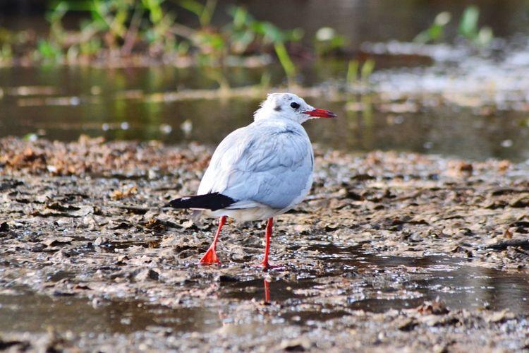 Showcase: February OpenEdit Bird Photography Bird