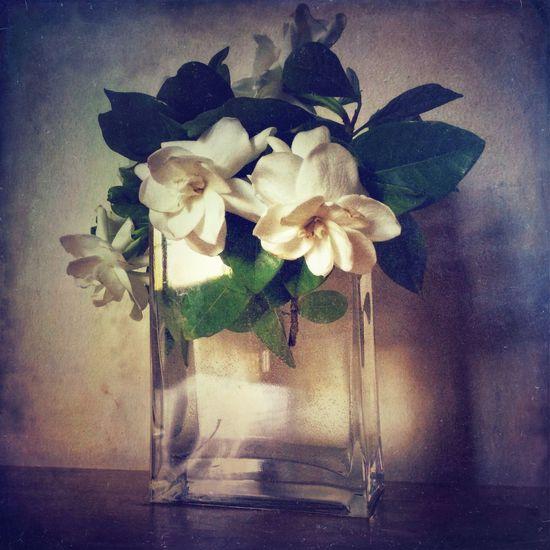 WeAreJuxt.com NEM Submissions EyeEm Best Shots - Flowers IPhoneography