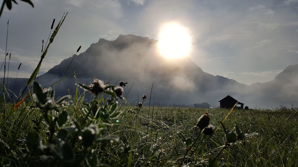 Zugspitz view . Austria Dew EyeEm Best Shots EyeEm Nature Lover EyeEmBestPics EyeEmNewHere Zugspitze Animal Themes Beauty In Nature Cloud - Sky Field Grass Landscape Mountain Nature No People Outdoors Plant Sky Sun Sunrise Sunset Tyrol