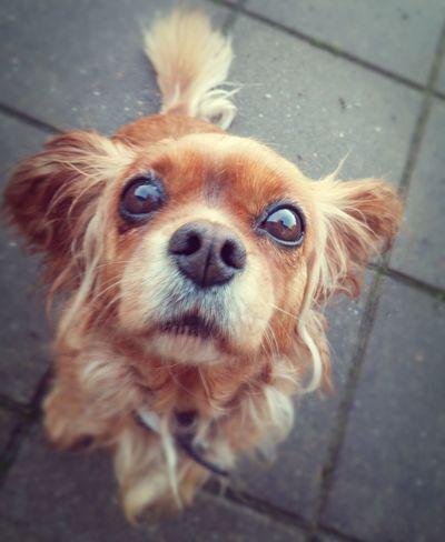 Do you have something for me? Dog Lover Dog Pet Photography  Dog Portrait