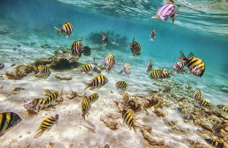 "Shoal of ""damsels"" or ""cebritas"" in Punta Inah, QR. First Eyeem Photo"