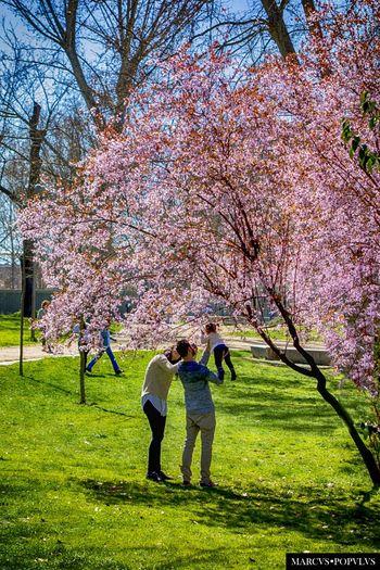 Título: Lignum vitae Autor: Marcus Populus Lugar: Madrid Río Cámara: SONY DSC-RX100 Punto F: f/5.6 Tiempo de exposición: 1/500s Velocidad ISO: 125 Distancia focal: 37mm Beauty In Nature Day Flower Fragility Love Nature Real People Springtime Tree
