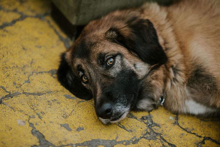 High angle view of dog lying on floor
