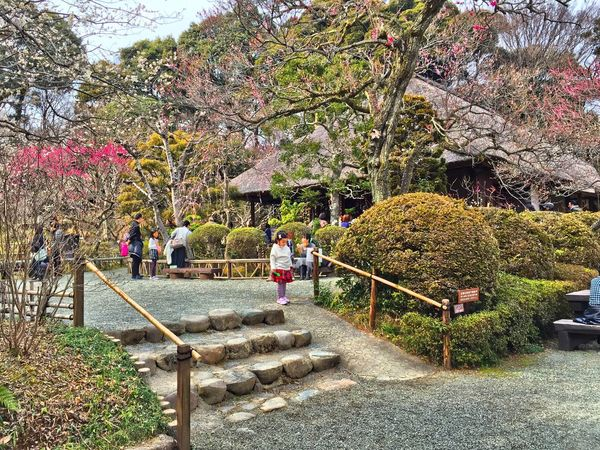 Spring has come. HDR Hdr_Collection Garden Spring Japan Japanese Culture Tadaa Community Nature Travel Traveling