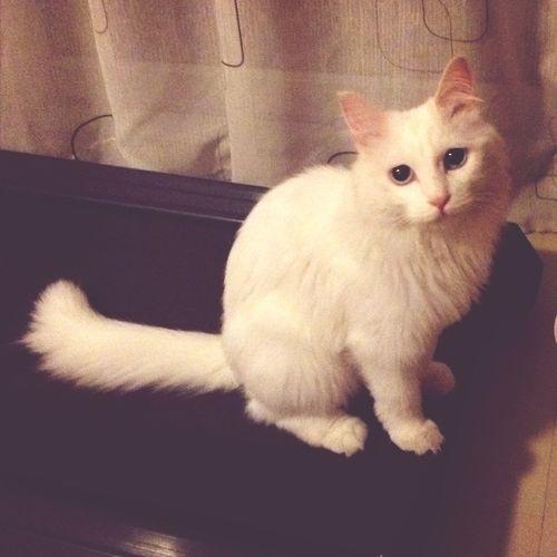 和美貌的猫咪作伴??? Cat Kitty
