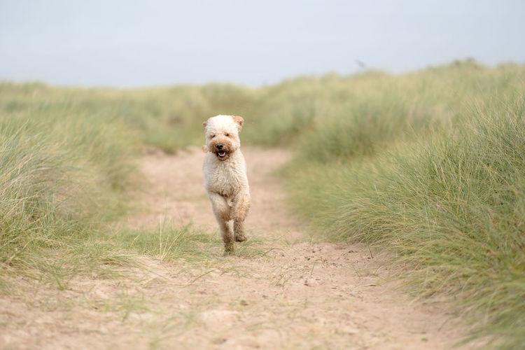 Dog On Grassy Beach