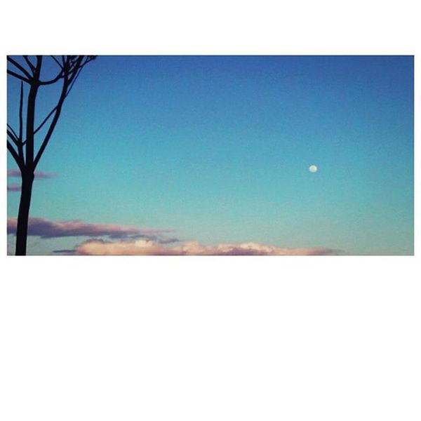 My heart swells with the moon. 🌚 - Donte Collins Moon Moonlover Sky Skyporn Skylover Bluesky Tree Fotorus Clouds Instapic