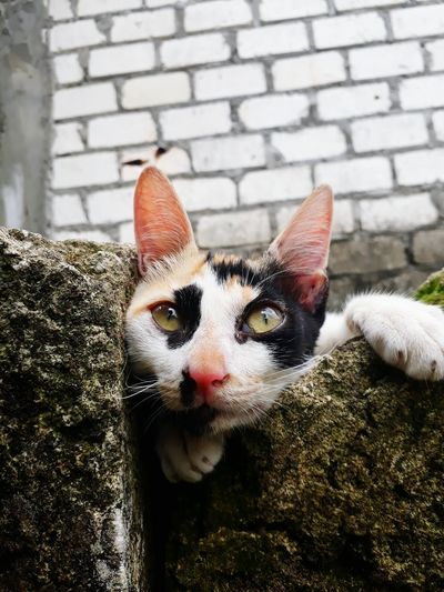 Pets Domestic Animals Animal Themes One Animal Mammal Domestic Cat Portrait Looking At Camera Day Outdoors No People Feline Close-up