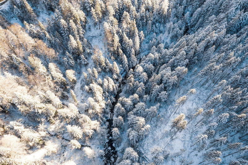 Birds eye view of river flowing through snow covered forest