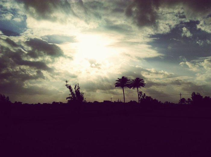 Tree Silhouette Sky Nature Cloud - Sky Palm Tree Beauty In Nature