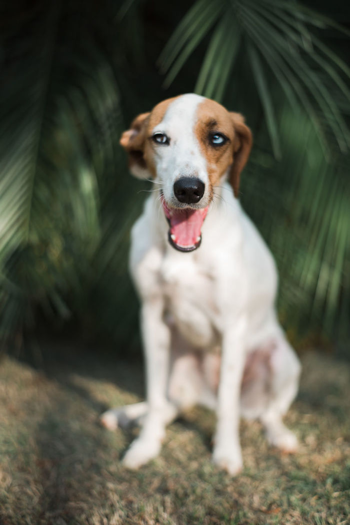 PORTRAIT OF DOG STICKING OUT TONGUE WHILE PLANTS