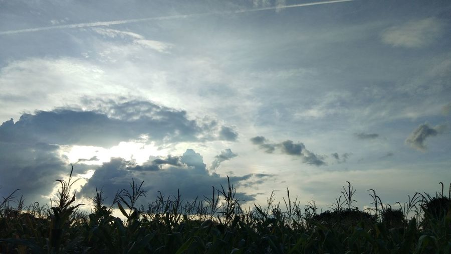 Low angle view of silhouette plants on field against sky