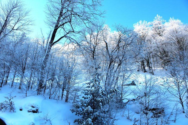Montana Snow Lovesnow Brezovica Sky