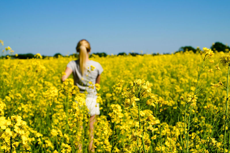 Rear View Of Woman Standing Amidst Oilseed Rape At Farm Against Clear Blue Sky