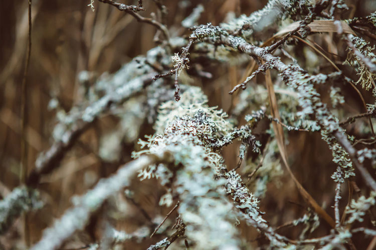 Beauty In Nature Branch Catkin Close-up Cold Temperature Day Fragility Frozen Growth Ice Landscape Lichen On A Tree Nature No People Outdoors Plant Snow Tranquility Tree Winter