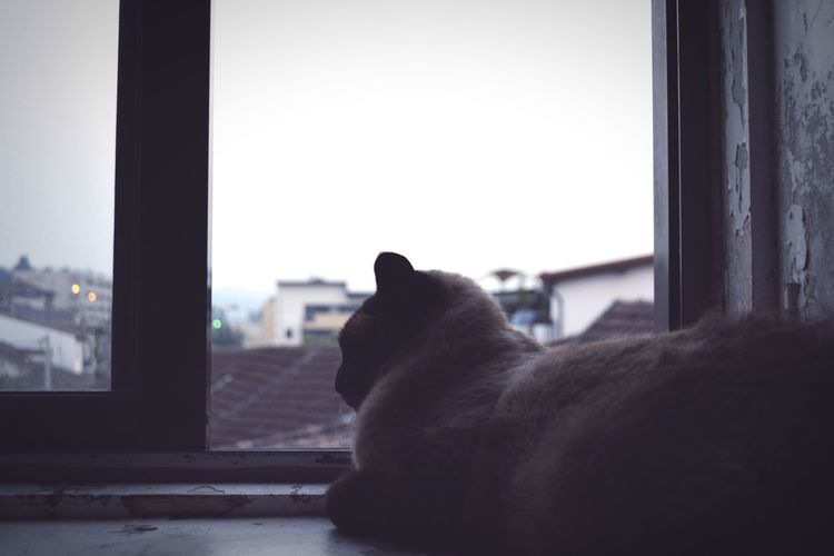 Close-up of cat looking through window